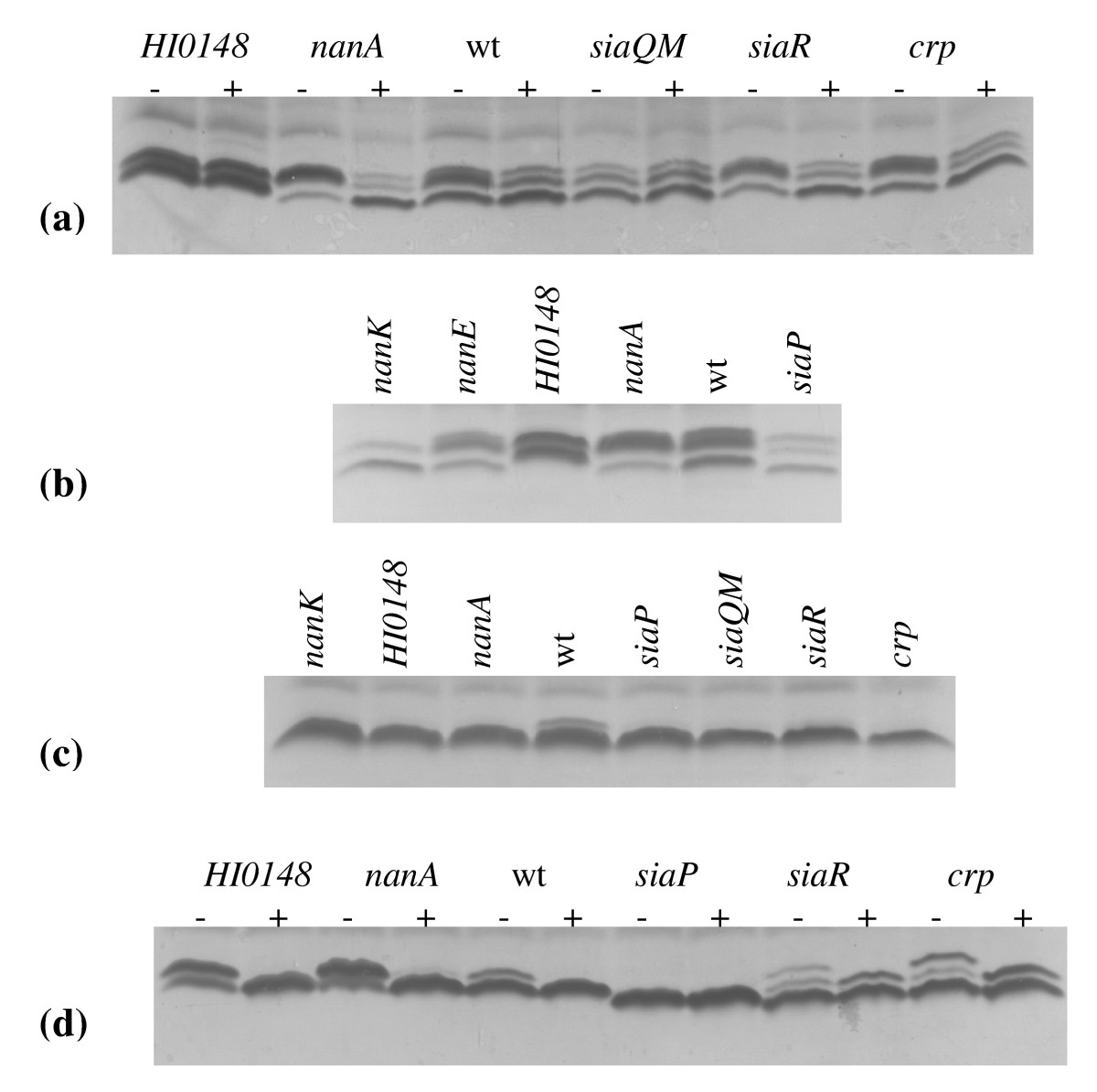 https://static-content.springer.com/image/art%3A10.1186%2F1471-2180-10-48/MediaObjects/12866_2009_Article_1004_Fig2_HTML.jpg