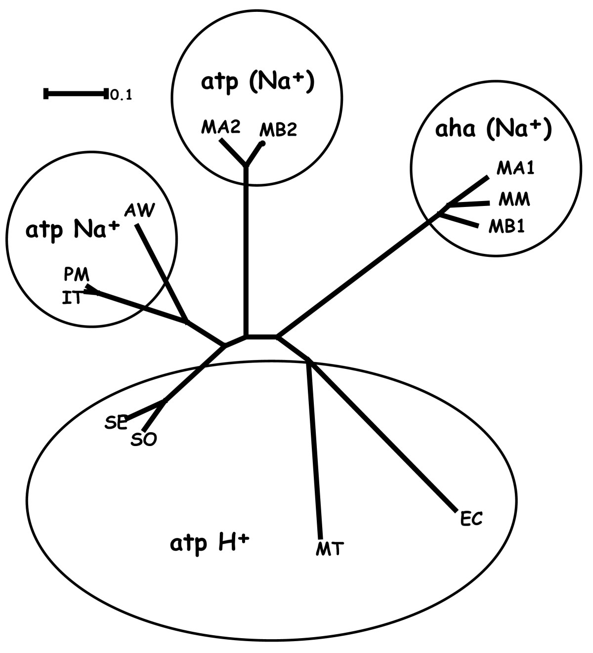 https://static-content.springer.com/image/art%3A10.1186%2F1471-2180-10-62/MediaObjects/12866_2009_Article_1018_Fig9_HTML.jpg