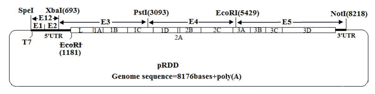 https://static-content.springer.com/image/art%3A10.1186%2F1471-2180-11-154/MediaObjects/12866_2011_Article_1429_Fig5_HTML.jpg