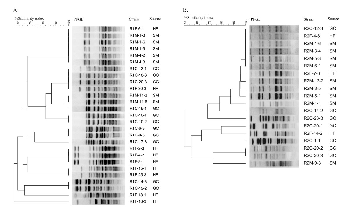 https://static-content.springer.com/image/art%3A10.1186%2F1471-2180-11-23/MediaObjects/12866_2010_Article_1310_Fig6_HTML.jpg