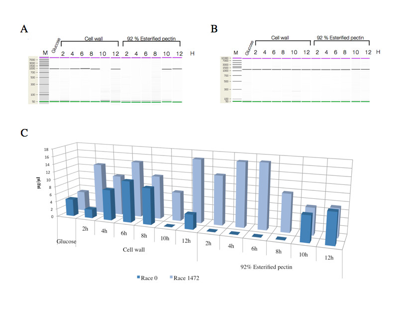 https://static-content.springer.com/image/art%3A10.1186%2F1471-2180-11-260/MediaObjects/12866_2011_Article_1567_Fig7_HTML.jpg