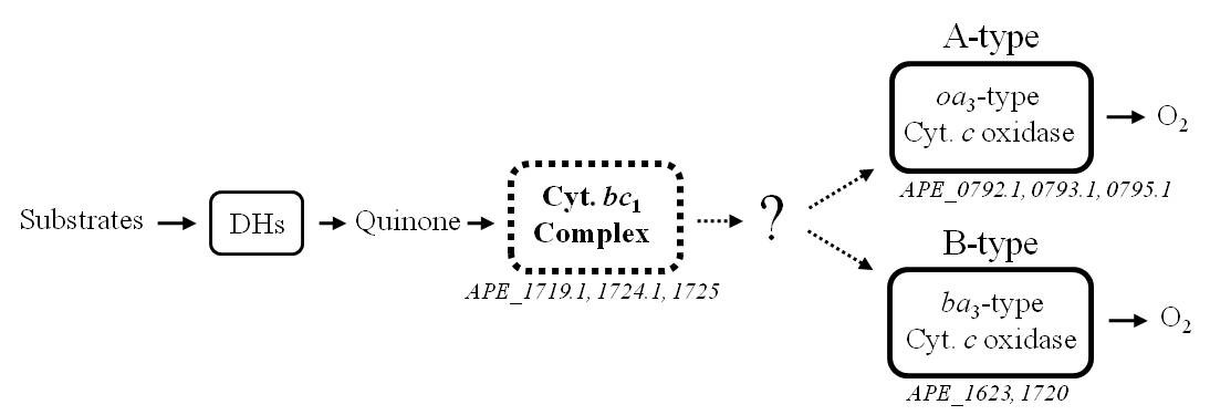 https://static-content.springer.com/image/art%3A10.1186%2F1471-2180-11-52/MediaObjects/12866_2010_Article_1339_Fig1_HTML.jpg