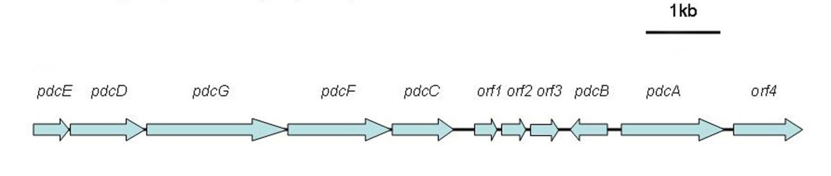 https://static-content.springer.com/image/art%3A10.1186%2F1471-2180-12-27/MediaObjects/12866_2011_Article_1603_Fig4_HTML.jpg
