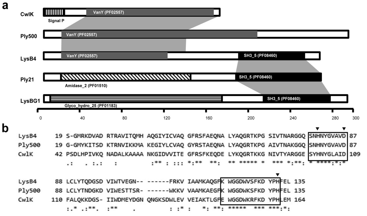 https://static-content.springer.com/image/art%3A10.1186%2F1471-2180-12-33/MediaObjects/12866_2011_Article_1600_Fig1_HTML.jpg