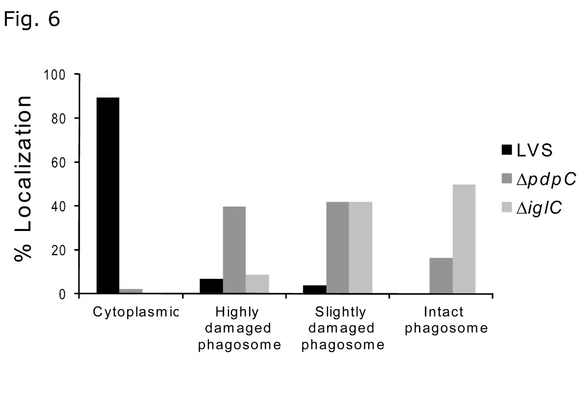 https://static-content.springer.com/image/art%3A10.1186%2F1471-2180-13-20/MediaObjects/12866_2012_Article_1870_Fig6_HTML.jpg