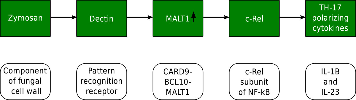 https://static-content.springer.com/image/art%3A10.1186%2F1471-2180-13-224/MediaObjects/12866_2013_Article_2476_Fig1_HTML.jpg