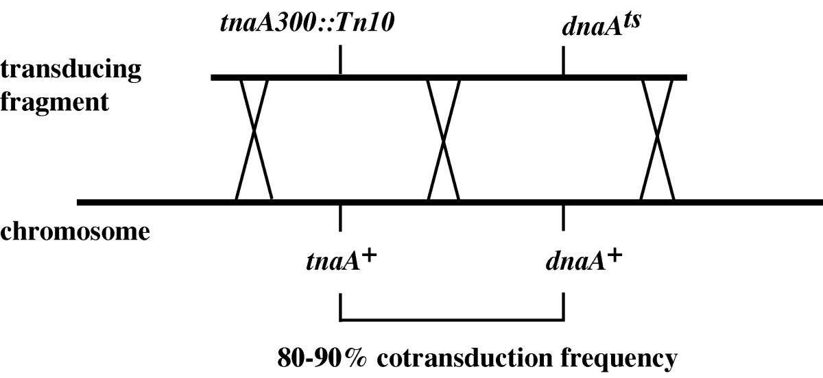 https://static-content.springer.com/image/art%3A10.1186%2F1471-2180-4-47/MediaObjects/12866_2004_Article_145_Fig2_HTML.jpg