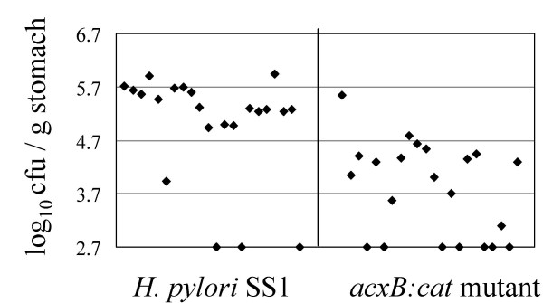 https://static-content.springer.com/image/art%3A10.1186%2F1471-2180-8-14/MediaObjects/12866_2007_Article_447_Fig3_HTML.jpg
