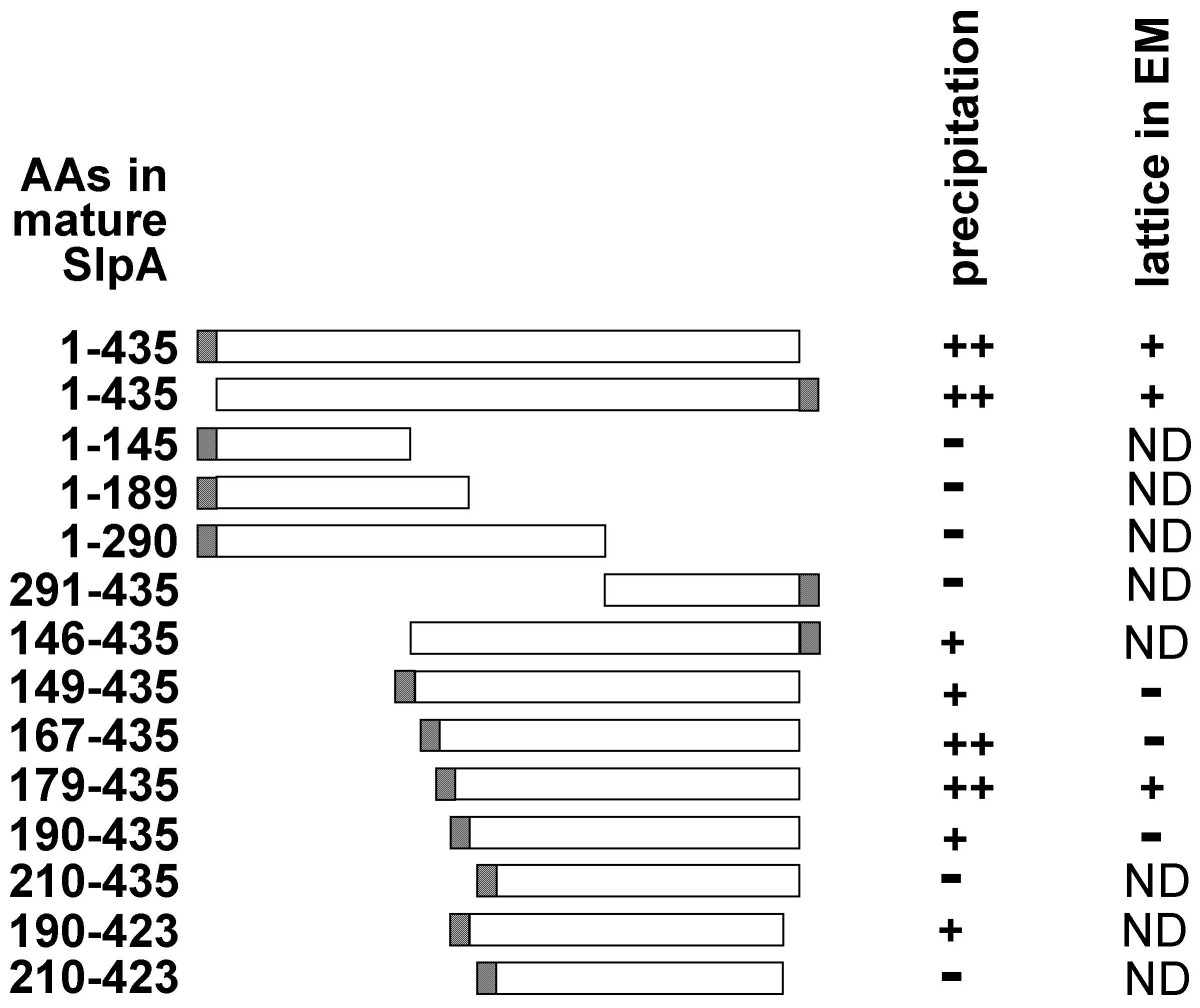 https://static-content.springer.com/image/art%3A10.1186%2F1471-2180-8-165/MediaObjects/12866_2008_Article_598_Fig2_HTML.jpg