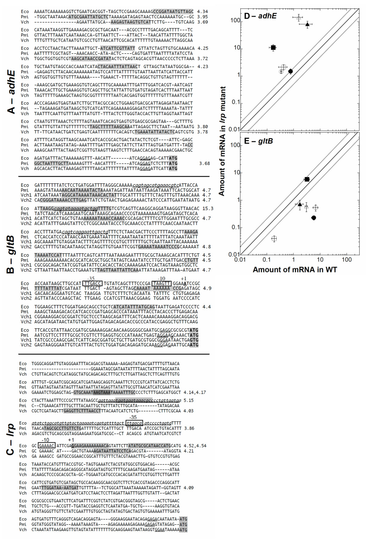 https://static-content.springer.com/image/art%3A10.1186%2F1471-2180-8-60/MediaObjects/12866_2007_Article_493_Fig10_HTML.jpg