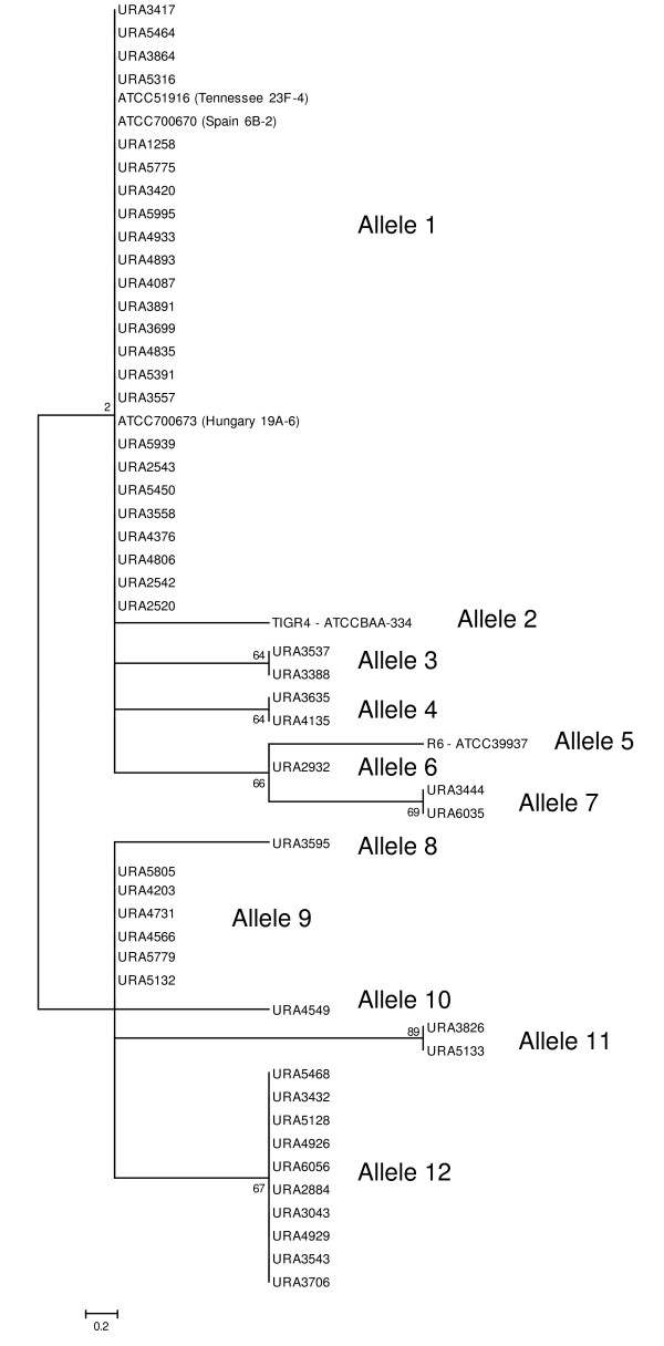 https://static-content.springer.com/image/art%3A10.1186%2F1471-2180-9-121/MediaObjects/12866_2008_Article_792_Fig1_HTML.jpg