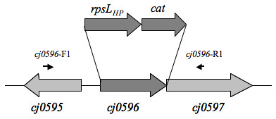 https://static-content.springer.com/image/art%3A10.1186%2F1471-2180-9-160/MediaObjects/12866_2009_Article_831_Fig2_HTML.jpg