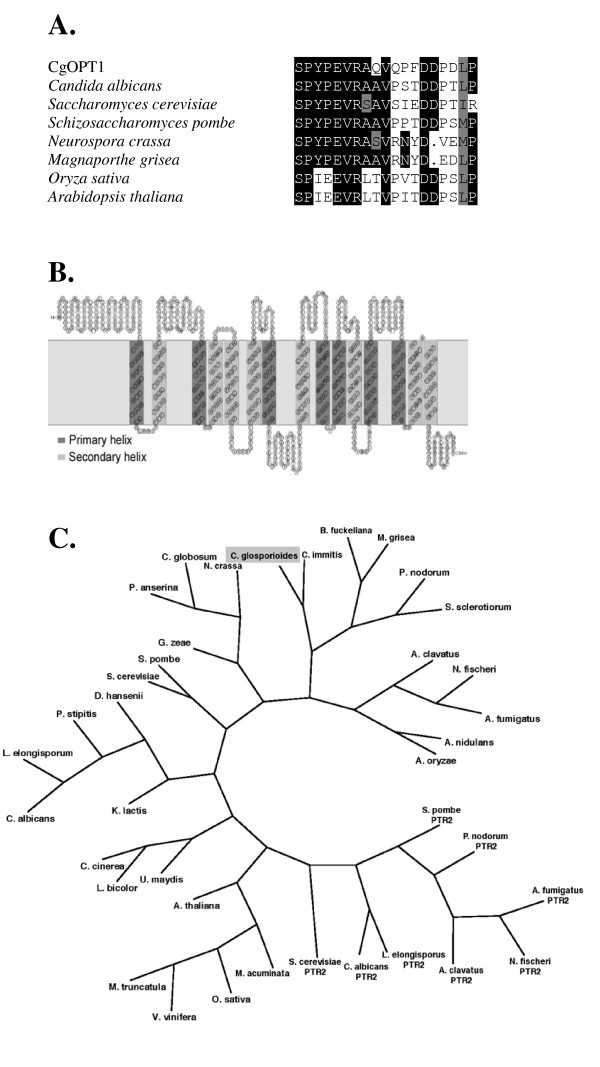 https://static-content.springer.com/image/art%3A10.1186%2F1471-2180-9-173/MediaObjects/12866_2008_Article_844_Fig1_HTML.jpg