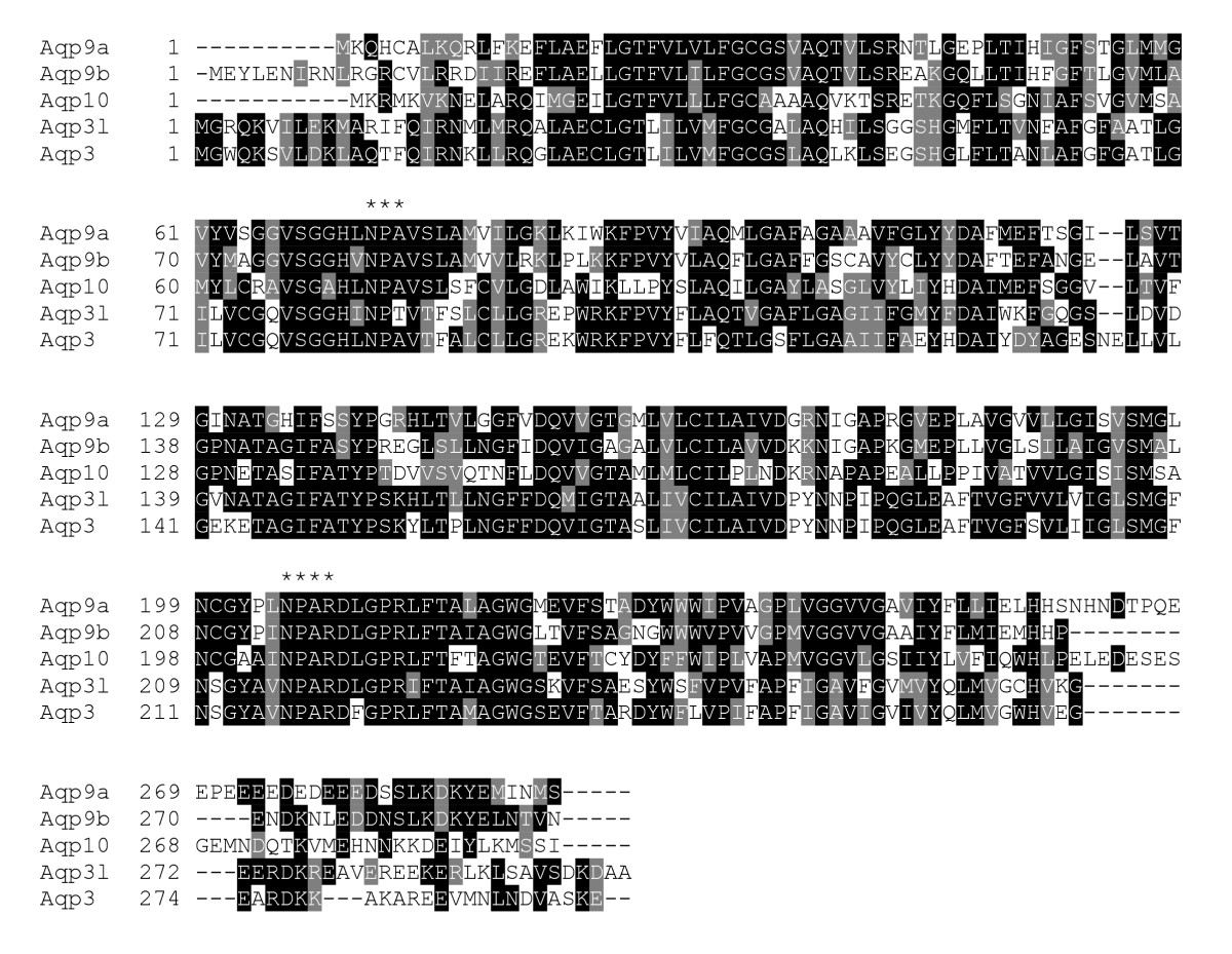 https://static-content.springer.com/image/art%3A10.1186%2F1471-2199-10-104/MediaObjects/12867_2009_Article_472_Fig2_HTML.jpg