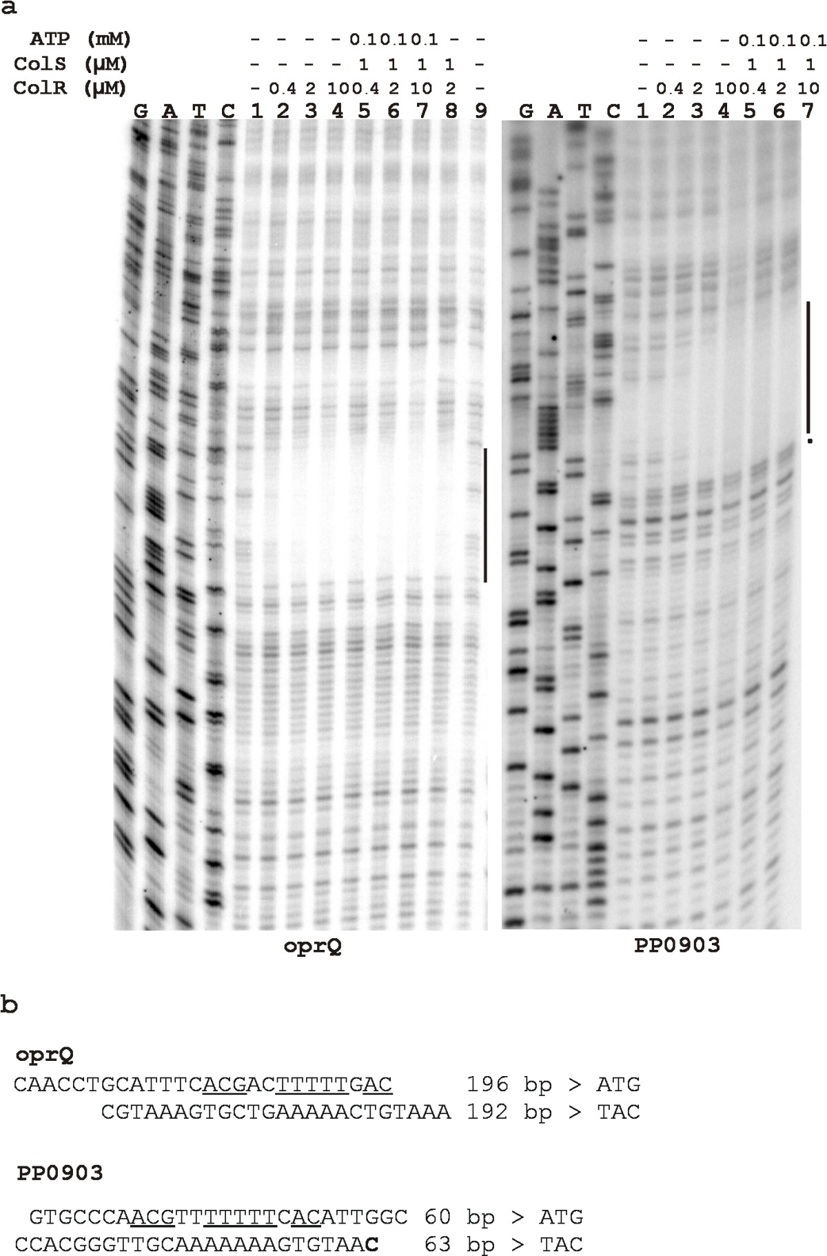 https://static-content.springer.com/image/art%3A10.1186%2F1471-2199-10-46/MediaObjects/12867_2008_Article_414_Fig2_HTML.jpg