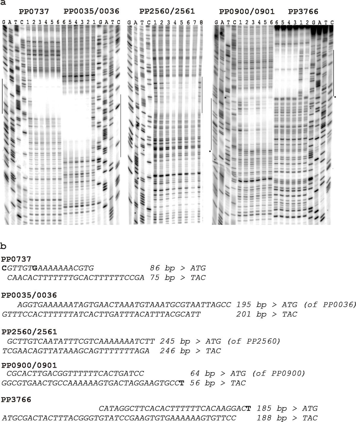 https://static-content.springer.com/image/art%3A10.1186%2F1471-2199-10-46/MediaObjects/12867_2008_Article_414_Fig4_HTML.jpg