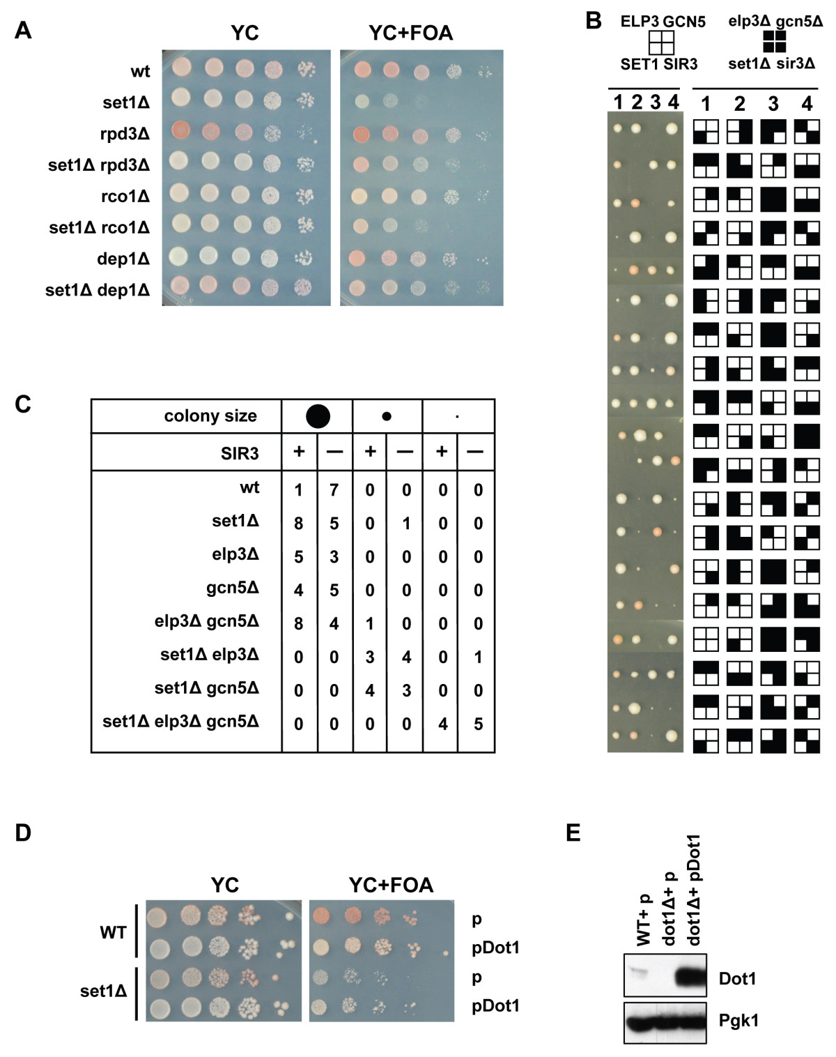 https://static-content.springer.com/image/art%3A10.1186%2F1471-2199-10-76/MediaObjects/12867_2009_Article_444_Fig4_HTML.jpg