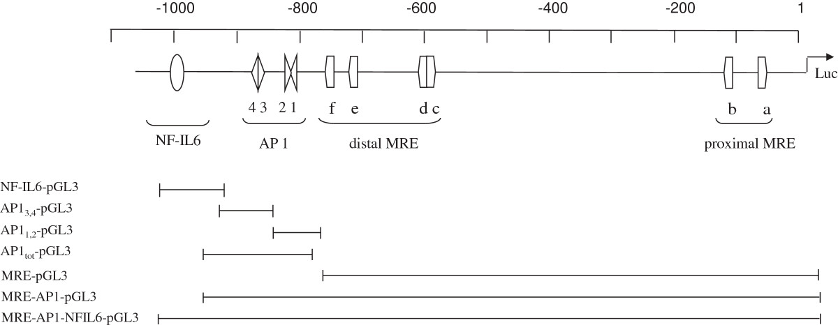 https://static-content.springer.com/image/art%3A10.1186%2F1471-2199-14-28/MediaObjects/12867_2013_Article_672_Fig1_HTML.jpg