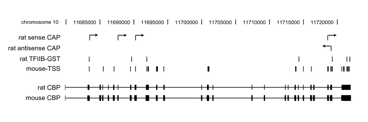https://static-content.springer.com/image/art%3A10.1186%2F1471-2199-8-102/MediaObjects/12867_2007_Article_239_Fig5_HTML.jpg