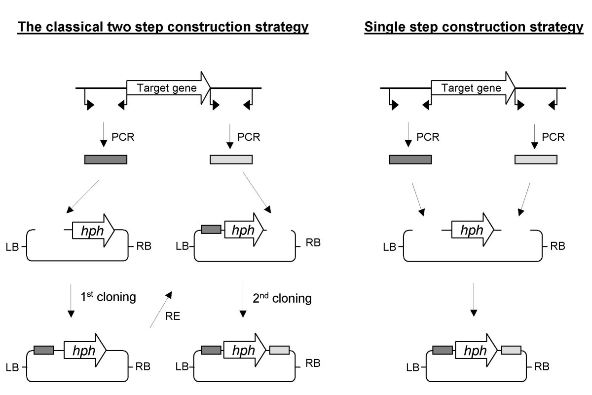 https://static-content.springer.com/image/art%3A10.1186%2F1471-2199-9-70/MediaObjects/12867_2008_Article_327_Fig1_HTML.jpg