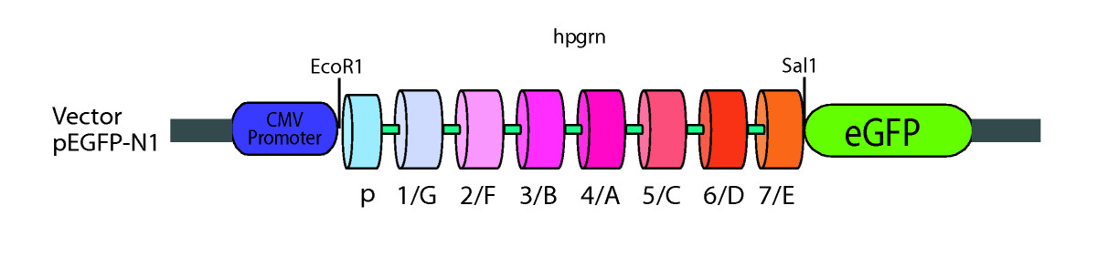 https://static-content.springer.com/image/art%3A10.1186%2F1471-2202-10-130/MediaObjects/12868_2009_Article_1134_Fig7_HTML.jpg