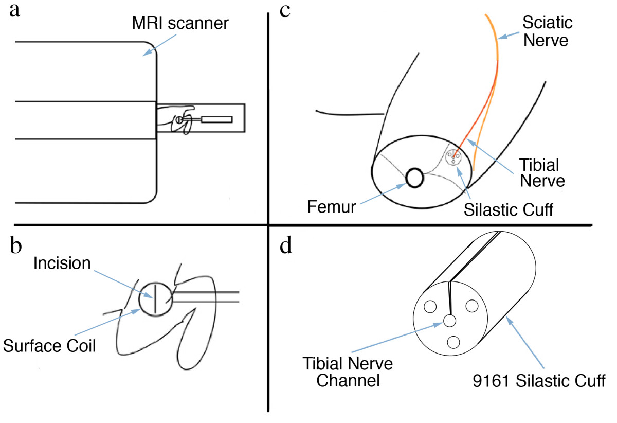 https://static-content.springer.com/image/art%3A10.1186%2F1471-2202-11-8/MediaObjects/12868_2009_Article_1567_Fig19_HTML.jpg