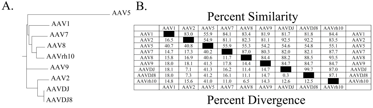 https://static-content.springer.com/image/art%3A10.1186%2F1471-2202-15-28/MediaObjects/12868_2013_Article_3479_Fig1_HTML.jpg