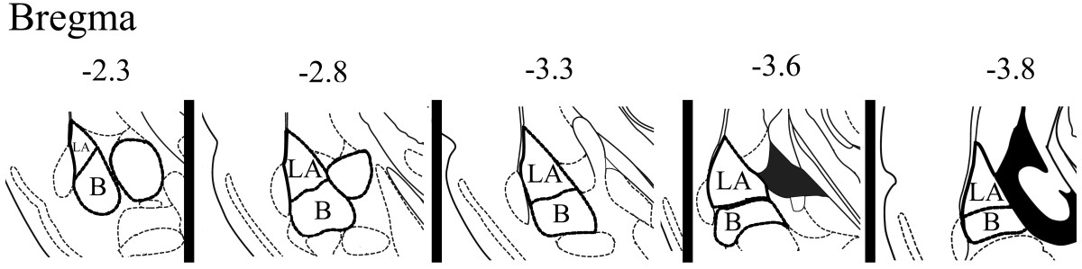 https://static-content.springer.com/image/art%3A10.1186%2F1471-2202-15-28/MediaObjects/12868_2013_Article_3479_Fig3_HTML.jpg