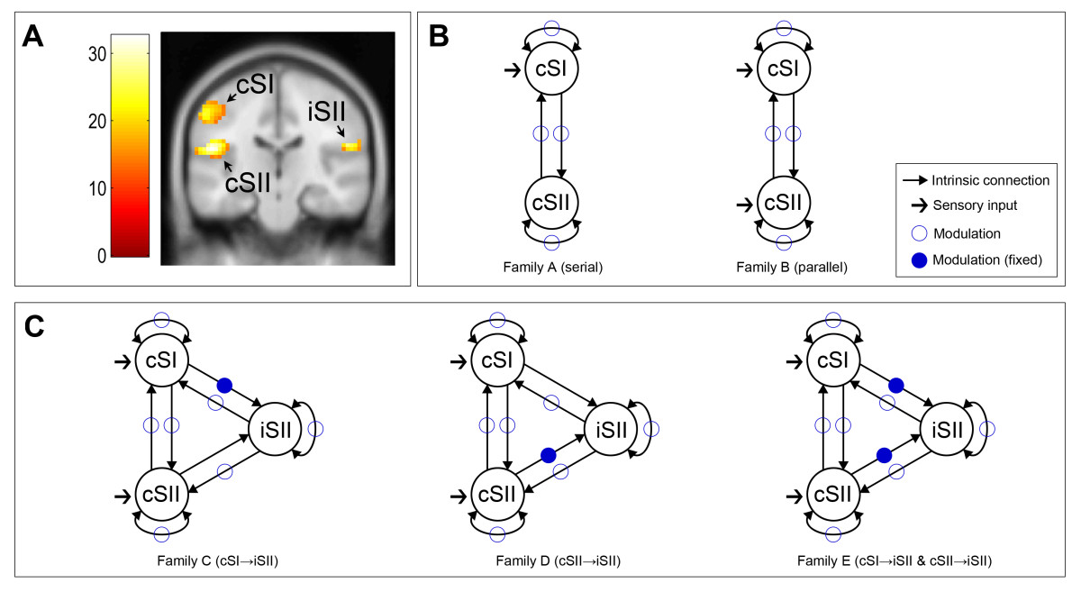 https://static-content.springer.com/image/art%3A10.1186%2F1471-2202-15-43/MediaObjects/12868_2013_Article_3492_Fig2_HTML.jpg