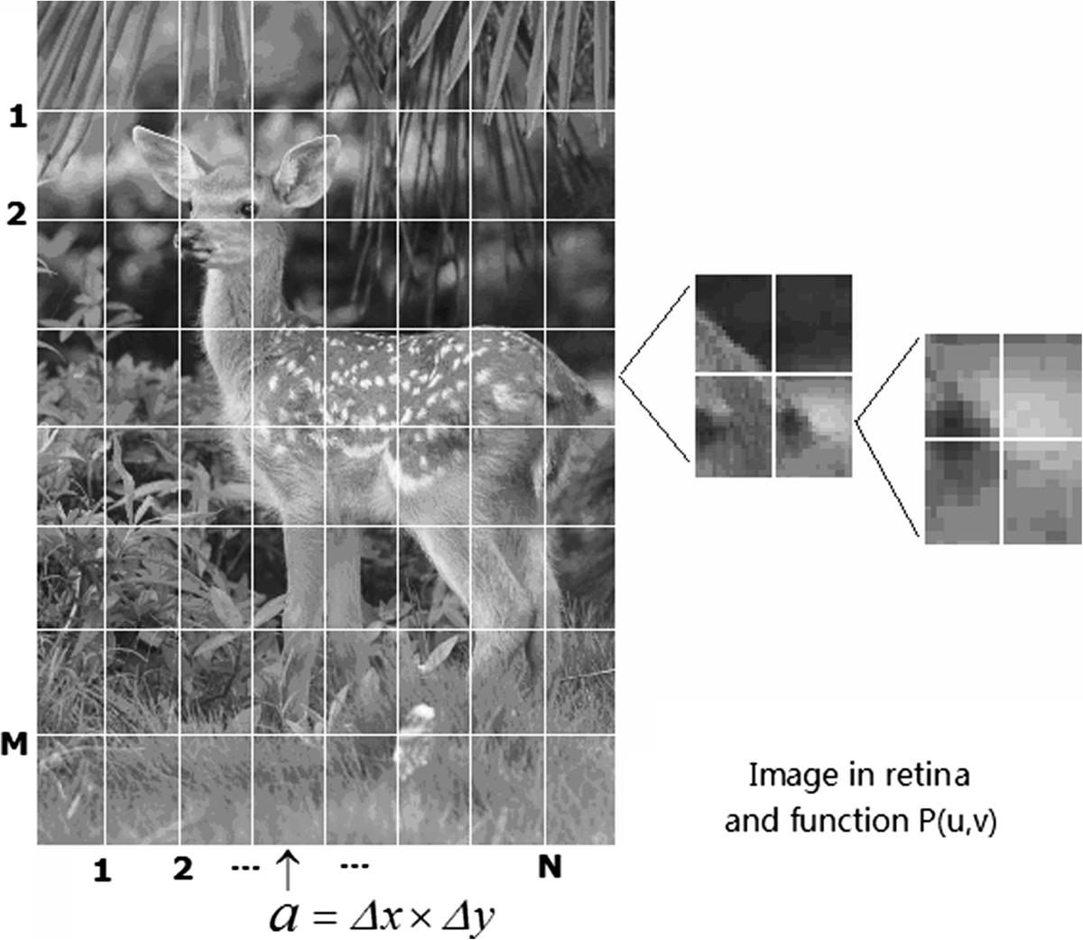 https://static-content.springer.com/image/art%3A10.1186%2F1471-2202-15-50/MediaObjects/12868_2013_Article_3504_Fig9_HTML.jpg