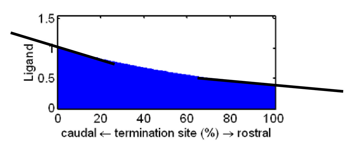 https://static-content.springer.com/image/art%3A10.1186%2F1471-2202-5-30/MediaObjects/12868_2004_Article_106_Fig9_HTML.jpg