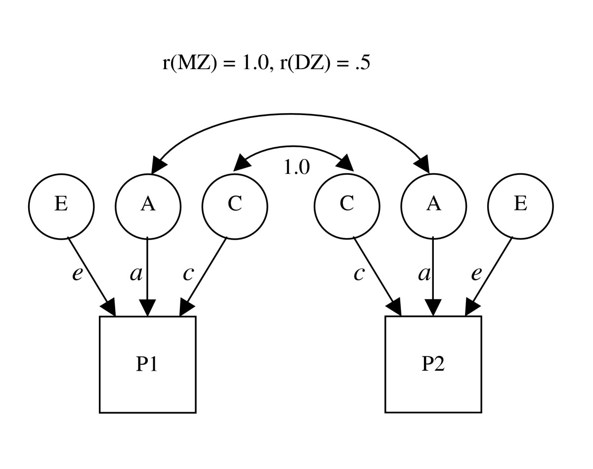 https://static-content.springer.com/image/art%3A10.1186%2F1471-2202-5-49/MediaObjects/12868_2004_Article_125_Fig1_HTML.jpg