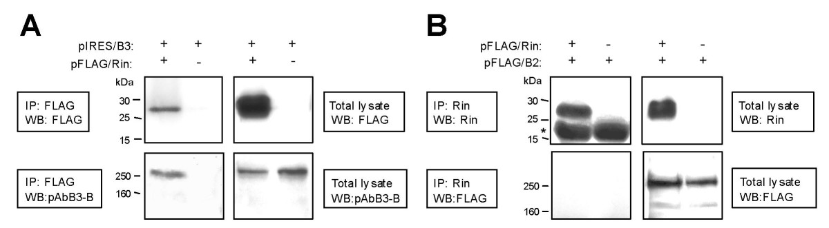 https://static-content.springer.com/image/art%3A10.1186%2F1471-2202-6-53/MediaObjects/12868_2005_Article_187_Fig14_HTML.jpg
