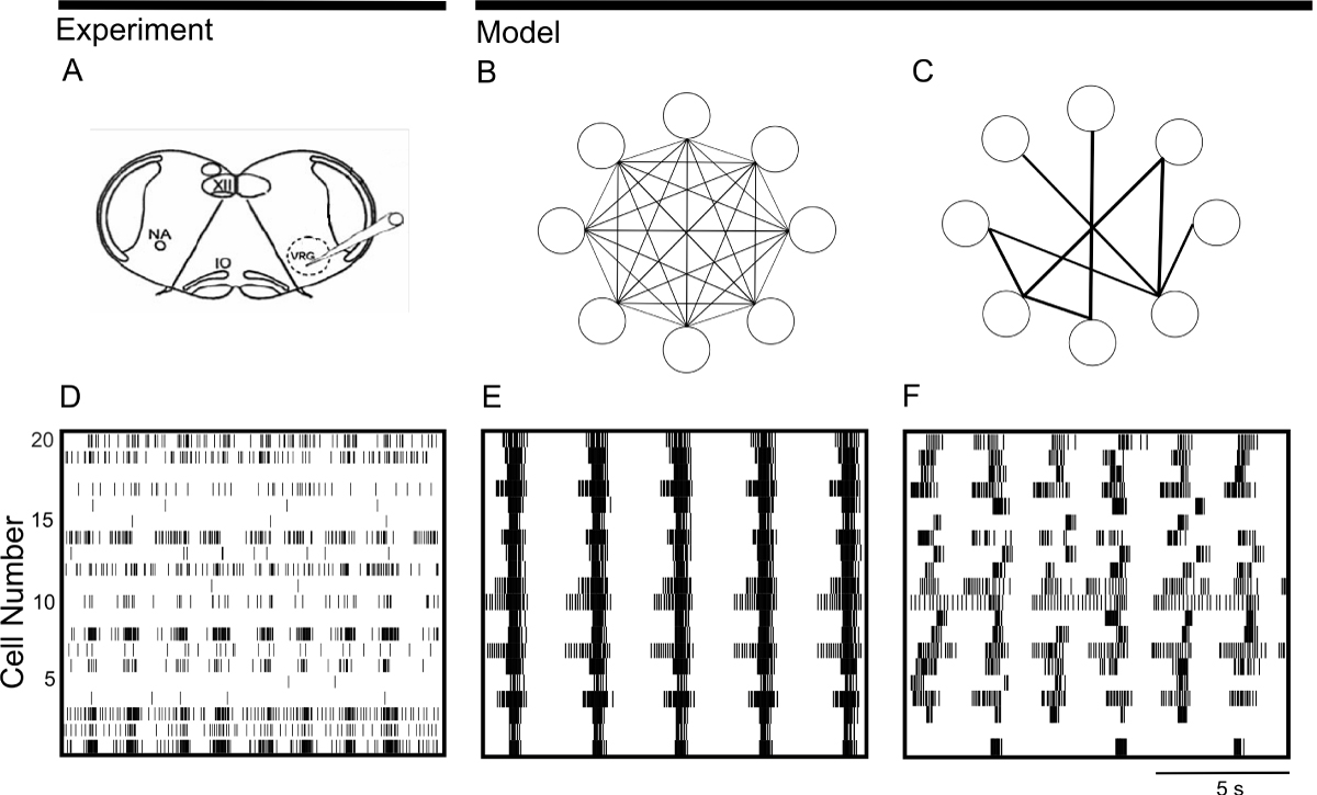 https://static-content.springer.com/image/art%3A10.1186%2F1471-2202-9-S1-P14/MediaObjects/12868_2008_Article_836_Fig1_HTML.jpg