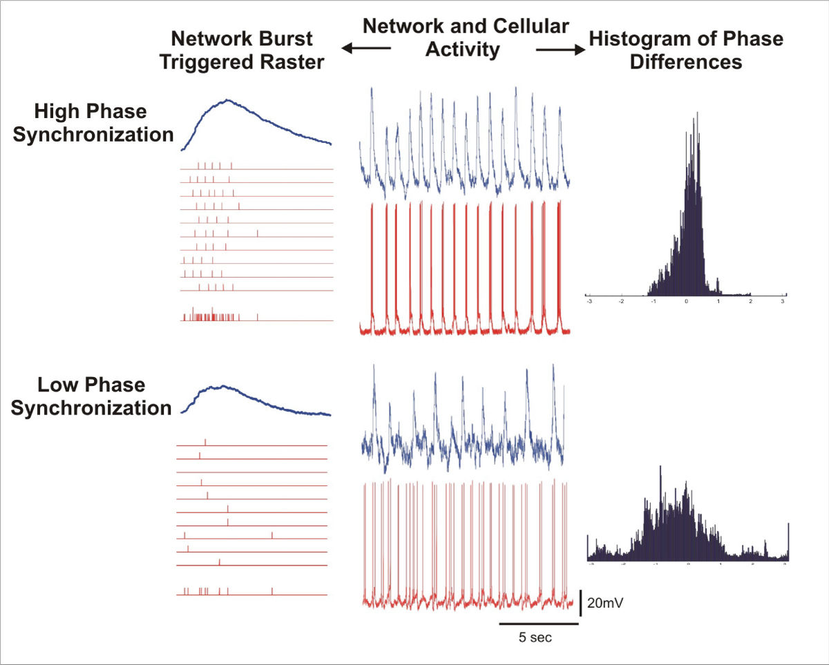 https://static-content.springer.com/image/art%3A10.1186%2F1471-2202-9-S1-P142/MediaObjects/12868_2008_Article_965_Fig2_HTML.jpg