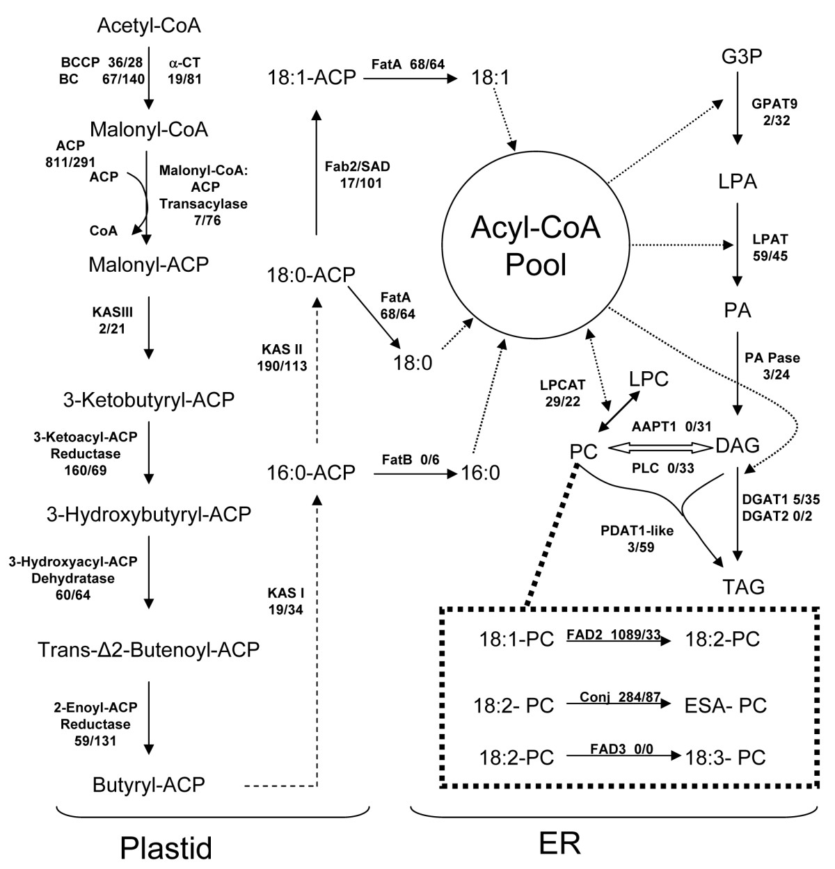 https://static-content.springer.com/image/art%3A10.1186%2F1471-2229-10-250/MediaObjects/12870_2010_Article_744_Fig6_HTML.jpg