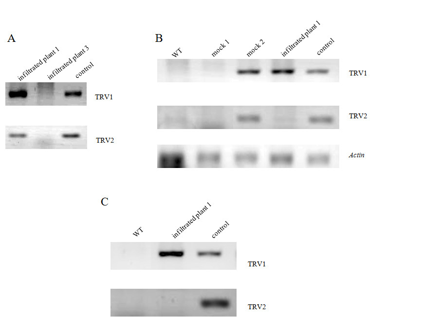 https://static-content.springer.com/image/art%3A10.1186%2F1471-2229-11-46/MediaObjects/12870_2010_Article_832_Fig4_HTML.jpg