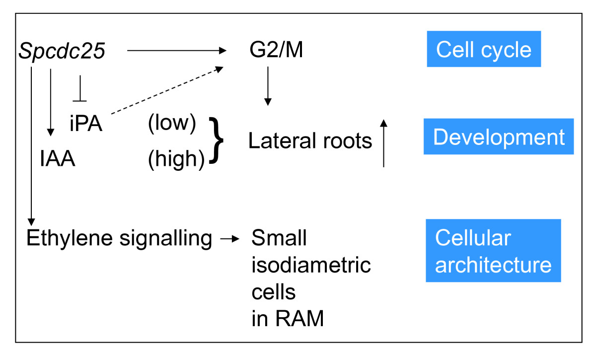 https://static-content.springer.com/image/art%3A10.1186%2F1471-2229-12-45/MediaObjects/12870_2011_Article_1013_Fig6_HTML.jpg