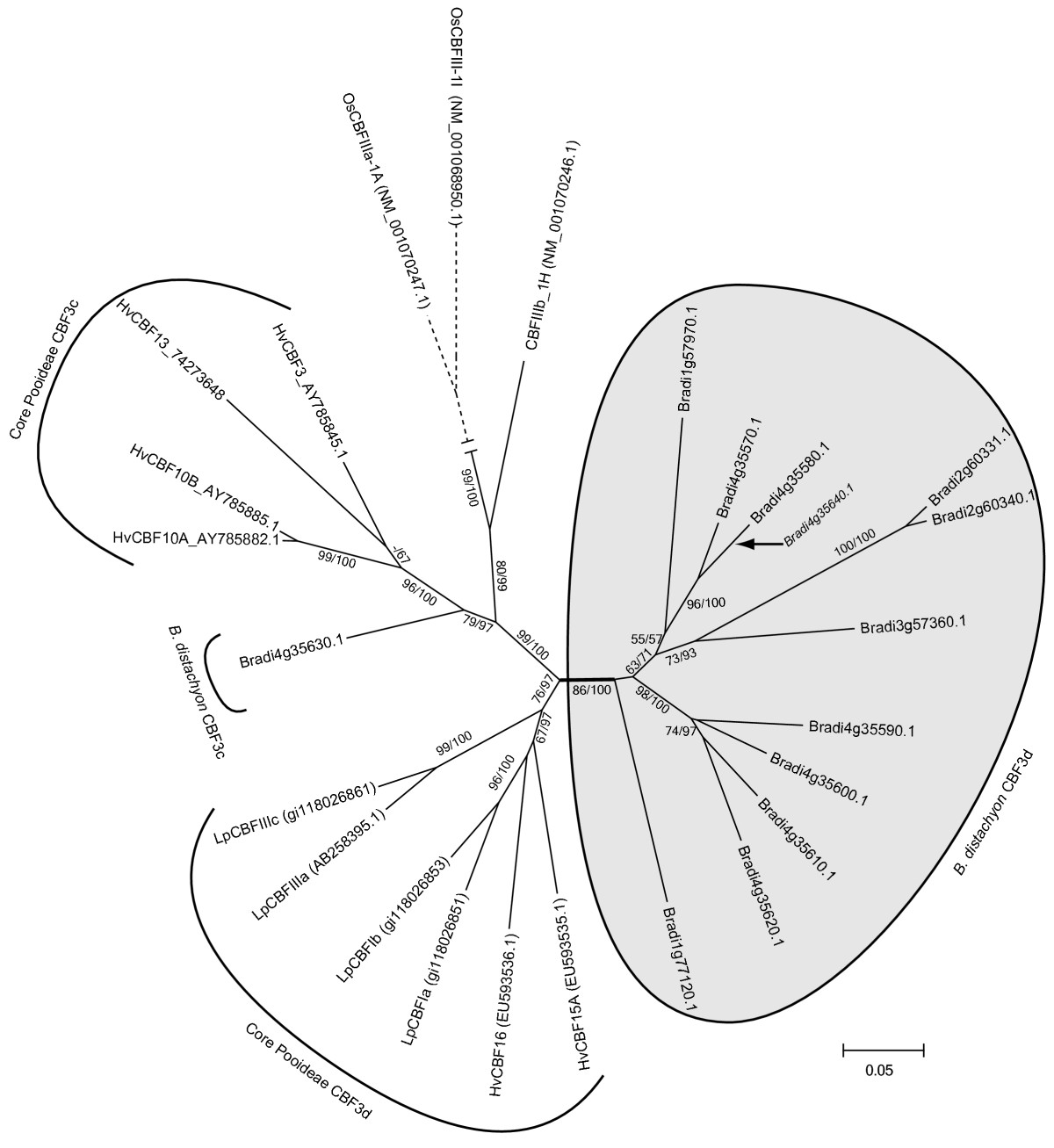https://static-content.springer.com/image/art%3A10.1186%2F1471-2229-12-65/MediaObjects/12870_2011_Article_1092_Fig4_HTML.jpg