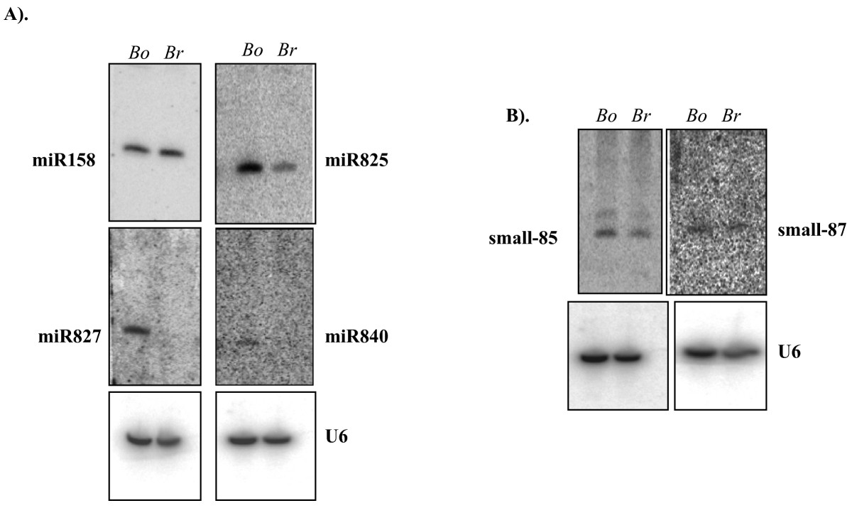 https://static-content.springer.com/image/art%3A10.1186%2F1471-2229-8-37/MediaObjects/12870_2007_Article_245_Fig4_HTML.jpg