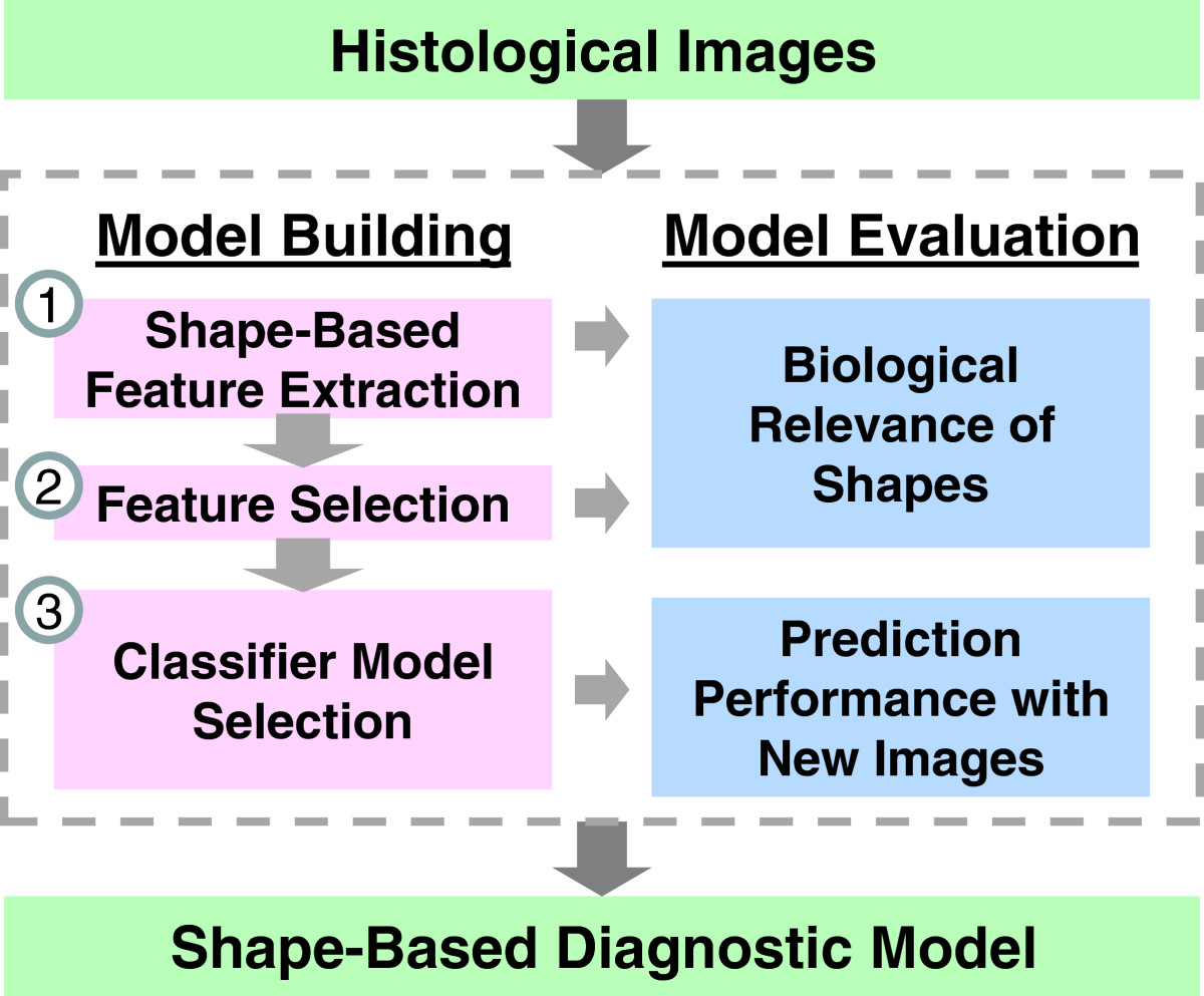 https://static-content.springer.com/image/art%3A10.1186%2F1471-2342-13-9/MediaObjects/12880_2012_Article_173_Fig2_HTML.jpg