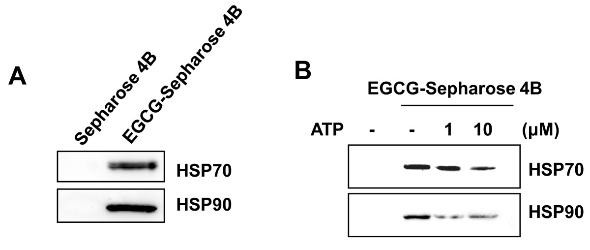 https://static-content.springer.com/image/art%3A10.1186%2F1471-2407-10-276/MediaObjects/12885_2009_Article_2075_Fig4_HTML.jpg