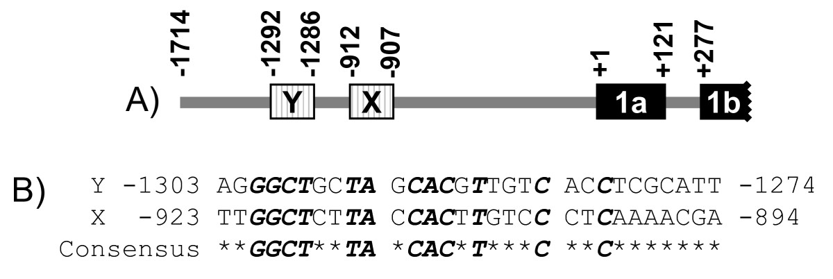 https://static-content.springer.com/image/art%3A10.1186%2F1471-2407-11-246/MediaObjects/12885_2011_Article_2742_Fig3_HTML.jpg