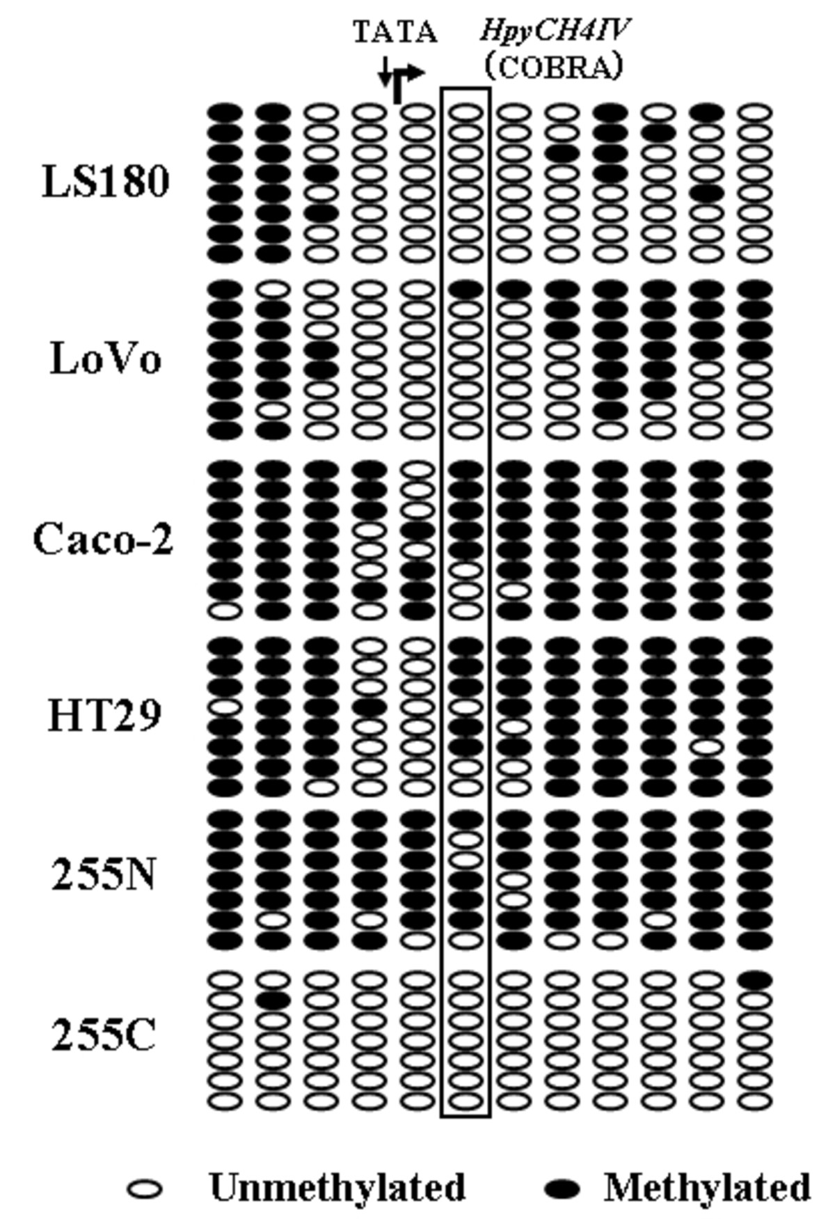 https://static-content.springer.com/image/art%3A10.1186%2F1471-2407-11-81/MediaObjects/12885_2010_Article_2573_Fig5_HTML.jpg