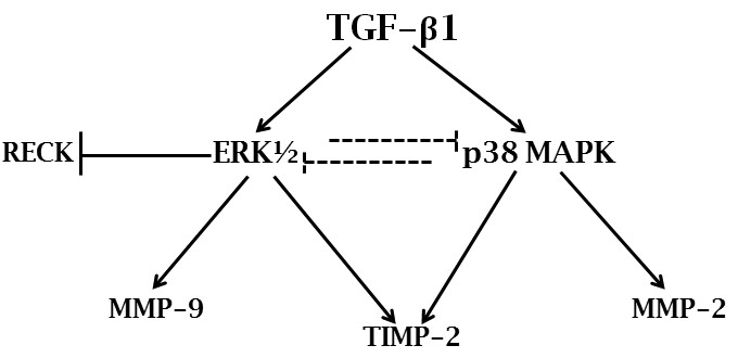 https://static-content.springer.com/image/art%3A10.1186%2F1471-2407-12-26/MediaObjects/12885_2011_Article_3021_Fig10_HTML.jpg