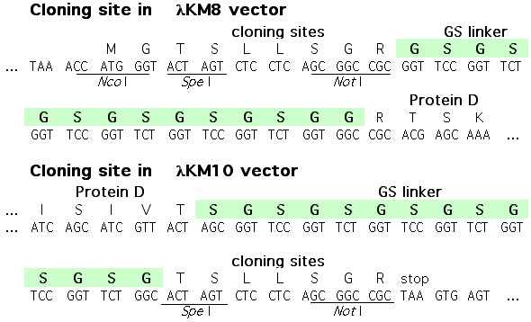 https://static-content.springer.com/image/art%3A10.1186%2F1471-2407-4-78/MediaObjects/12885_2004_Article_168_Fig1_HTML.jpg