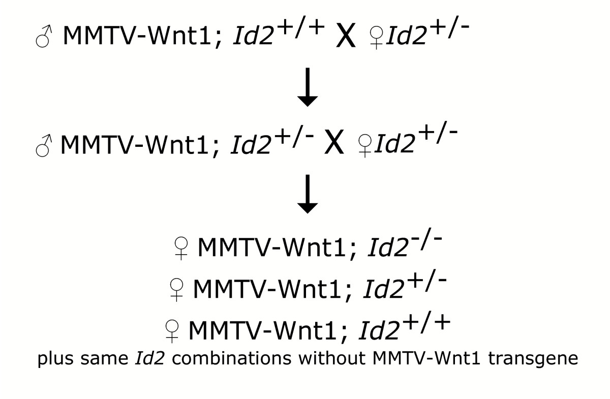 https://static-content.springer.com/image/art%3A10.1186%2F1471-2407-4-91/MediaObjects/12885_2004_Article_181_Fig1_HTML.jpg