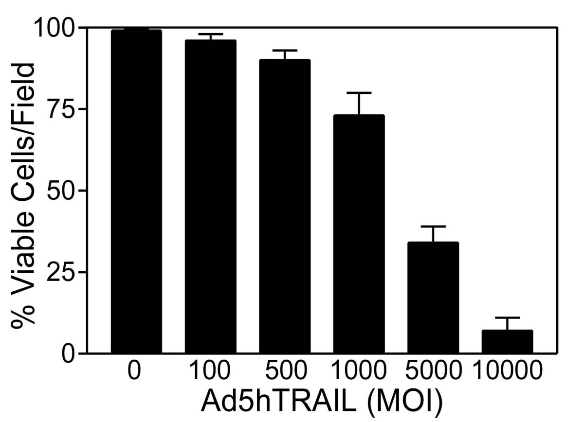 https://static-content.springer.com/image/art%3A10.1186%2F1471-2407-5-54/MediaObjects/12885_2005_Article_242_Fig9_HTML.jpg