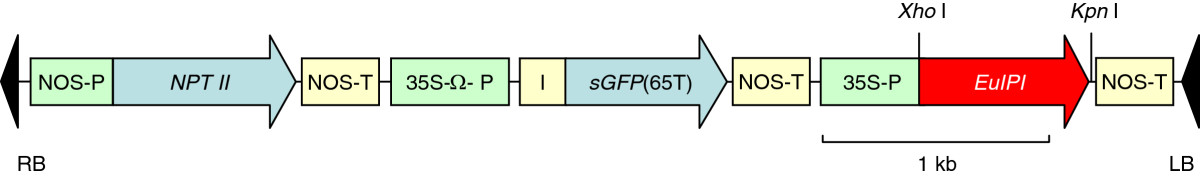 https://static-content.springer.com/image/art%3A10.1186%2F1472-6750-12-78/MediaObjects/12896_2011_Article_779_Fig8_HTML.jpg
