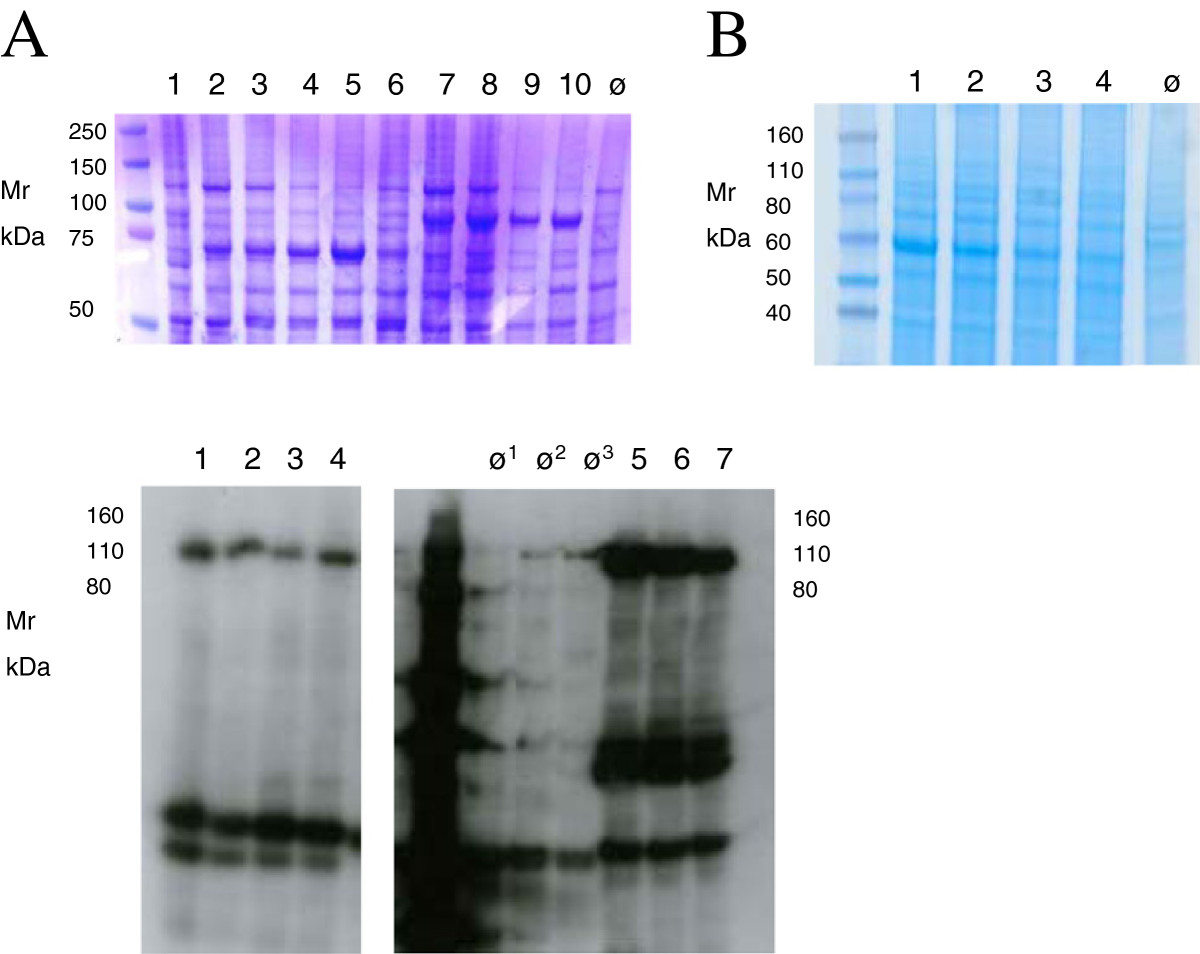 https://static-content.springer.com/image/art%3A10.1186%2F1472-6750-13-12/MediaObjects/12896_2012_Article_795_Fig6_HTML.jpg